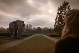 Begegnung mit Elefant