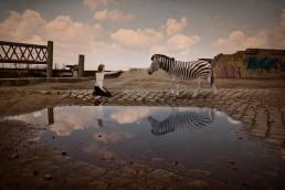 Begegnung mit Zebra